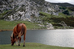 Ercina lake, Covadonga. According to the legend, under its waters a village -or perhaps a city- is hidden.