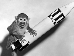 Miss Baker, a squirrel monkey, with a model of the Jupiter that launched her on a suborbital flight in 1959