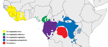 The red shading indicates the range of the bonobo (Pan paniscus). The blue shading indicates the range of the Common chimpanzee (Pan troglodytes). This is an example of allopatric speciation because they are divided by a natural barrier (the Congo River) and have no habitat in common. Other Pan subspecies are shown as well.