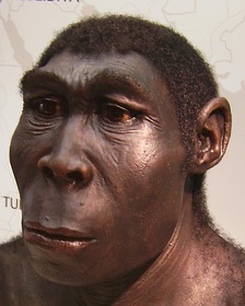 Forensic reconstruction of an adult male Homo erectus.[4]