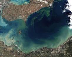 The green scum shown in this image taken in October 2011 is the worst algae bloom Lake Erie has experienced in decades.