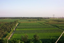 Farmlands in Hebei province, China