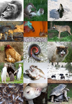 A range of animal behaviours