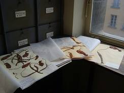"Herbarium specimens (""exsiccatae"") of various Nepenthes at the Museum National d'Histoire Naturelle in Paris, France"