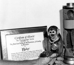 "Squirrel monkey ""Miss Baker"" poses with the Certificate of Merit for Distinguished Service she was awarded by the ASPCA after her successful return to earth, the associated medal, and the couch used for her flight (to the right). Baker and her traveling companion Able were the first animals to return alive from space."
