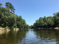 Withlacoochee River near the confluence with the Suwannee River