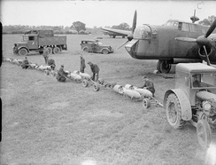 Armourers prepare 500-lb GP bombs for Armstrong Whitworth Whitley of 58 Squadron at RAF Linton-on-Ouse