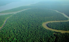 An area of the Amazon rainforest in Brazil. The tropical rainforests of South America contain the largest diversity of species on Earth.[1][2]