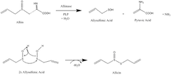 Biosynthesis of Allicin