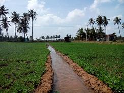 Irrigation in Tamil Nadu, India