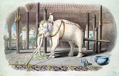 A white elephant at the Amarapura Palace in 1855