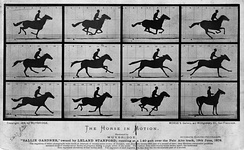 Muybridge's photographs of The Horse in Motion, 1878, were used to answer the question whether all four feet of a galloping horse are ever off the ground at the same time. This demonstrates a use of photography as an experimental tool in science.