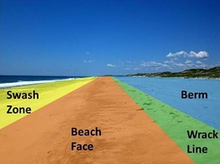 The four sections of most beaches. Swash zone: is alternately covered and exposed by wave run-up.Beach face: sloping section below berm that is exposed to the swash of the waves.Wrack line: the highest reach of the daily tide where organic and inorganic debris is deposited by wave action.Berm: Nearly horizontal portion that stays dry except during extremely high tides and storms. May have sand dunes.
