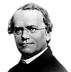 Abbot Gregor Mendel (1822-1884), Augustinian friar and founder of genetics. His work and that of Darwin laid the groundwork for the study of life sciences in the twentieth century.