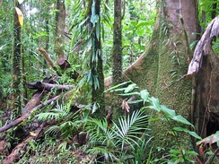 "Daintree ""rainforest"" in Queensland is actually a seasonal tropical forest."