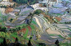 Rice terraces in Yuanyang County, Yunnan, China
