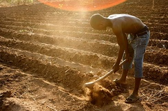 A farmer on the outskirts of Lilongwe (Malawi) prepares a field for planting.