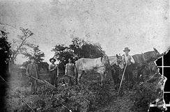 Cotton workers in Mableton, around 1900