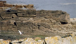 Cross-bedding in a fluviatile sandstone, Middle Old Red Sandstone (Devonian) on Bressay, Shetland Islands