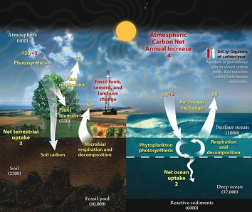 Carbon is constantly transported between the different elements of the climate system: fixed by living creatures and transported through the ocean and atmosphere.