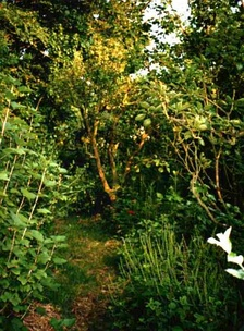 Robert Hart's forest garden in Shropshire, England