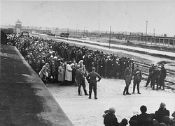 Jews from Subcarpathian Rus on the selection ramp at Auschwitz II, c. May 1944. Women and children are lined up on one side, men on the other, waiting for the SS to determine who was fit for work. About 20 percent at Auschwitz were selected for work and the rest gassed.[352]