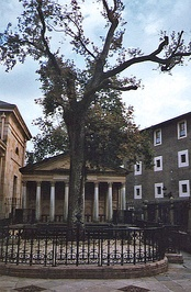 The historic Oak of Gernika, symbol of the Basque institutions.