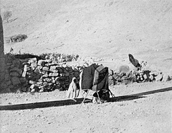 Weaving lengths of fabric for tent making using ground loom. Palestine, c. 1900