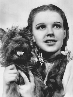 Terry as Toto with Judy Garland in The Wizard of Oz (1939)