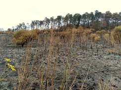 Bushland in Prospect Hill, Sydney charred after grass fire.