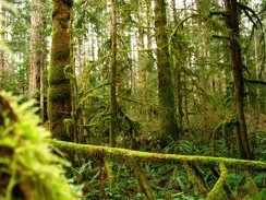 The western side of Vancouver Island hosts a rainforest.