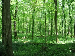 Forest at Otter Creek Outdoor Recreation Area, Meade County, Kentucky