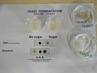 Fermentation of sucrose by yeast