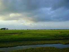 Paddy fields in Myanmar