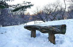 Central Park in 2011 during the winter.
