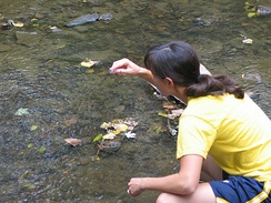 An environmental science program – a student from Iowa State University sampling water