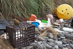 Marine debris strewn over the beaches of the South Atlantic Inaccessible Island