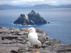Little Skellig, as seen from Skellig Michael.