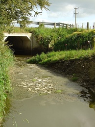 Water pollution in a rural stream due to runoff from farming activity in New Zealand