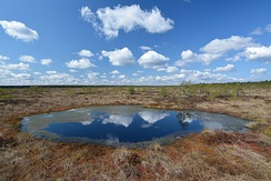 Precipitation accumulates in many bogs, forming bog pools, such as Koitjärve bog in Estonia
