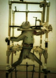 "PETA distributed images of the monkeys with the caption, ""This is vivisection. Don't let anyone tell you different.""[15]"