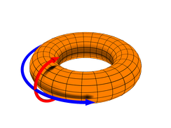 In a top-loading washer, water circulates primarily along the poloidal axis during the wash cycle, as indicated by the red arrow in this illustration of a torus.