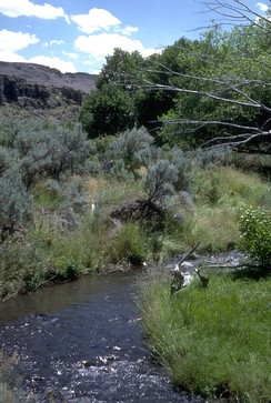 Riparian zone along Trout Creek in the Trout Creek Mountains, part of the Burns Bureau of Land Management District in southeastern Oregon. The creek provides critical habitat for trout.