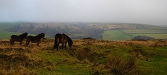 Three small brown horses on grassy area. In the distance are hills.