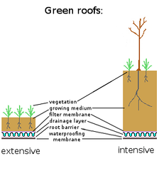 An intensive and an extensive green roof