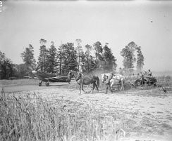 A Spitfire Mark IX of No. 443 Squadron RCAF taxies to dispersal at B-2 Bazenville, alongside a field where French farmers are gathering in the wheat