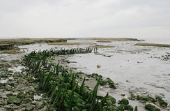 A timber channel, and chalk and ragstone remains of the sea wall built c. 1622.[16]