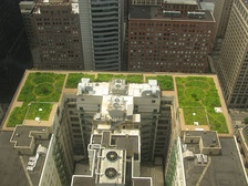 Green roof of Chicago City Hall