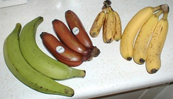 Left to right: plantains, red bananas, latundan, and Cavendish bananas
