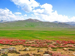 Deosai National Park covers the world's second-highest plateau.